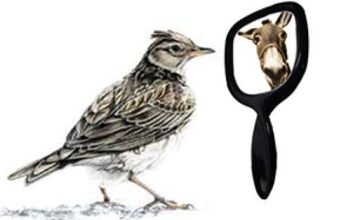 La realtà e gli specchietti per le allodole
